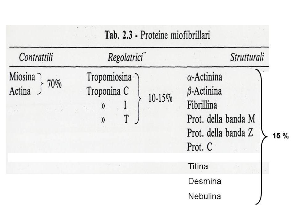 15 % Titina Desmina Nebulina