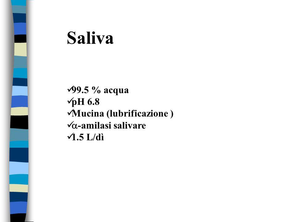 Saliva 99.5 % acqua pH 6.8 Mucina (lubrificazione ) -amilasi salivare
