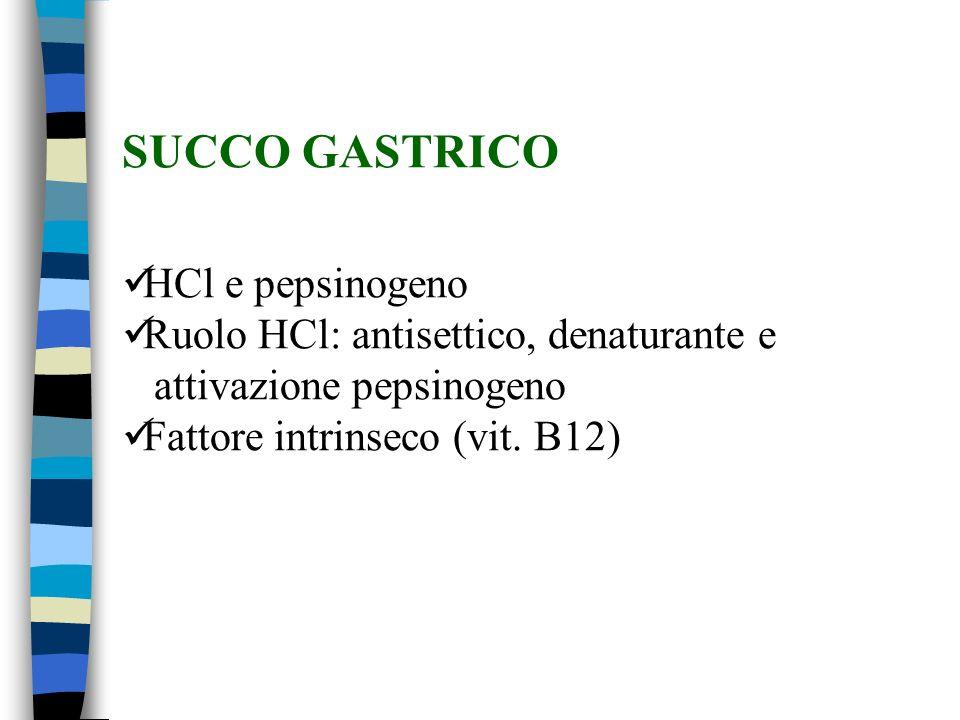 SUCCO GASTRICO HCl e pepsinogeno Ruolo HCl: antisettico, denaturante e