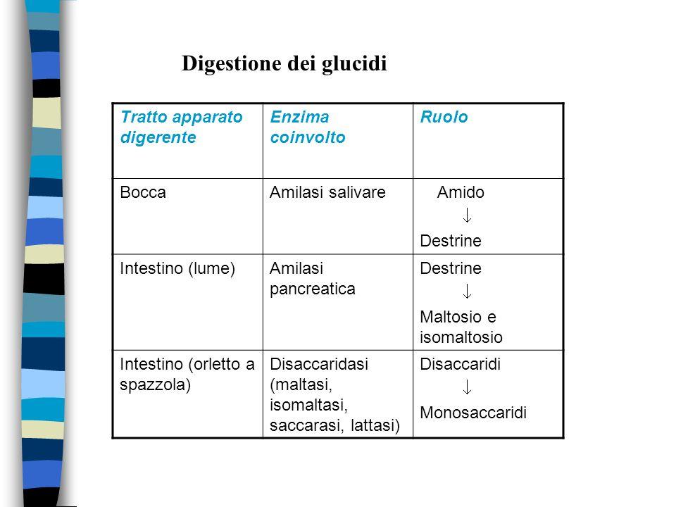 Digestione dei glucidi