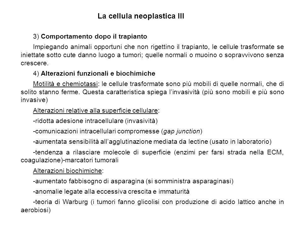 La cellula neoplastica III