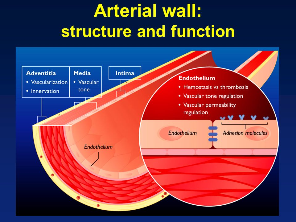 Arterial wall: structure and function