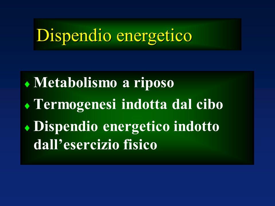Dispendio energetico Metabolismo a riposo Termogenesi indotta dal cibo
