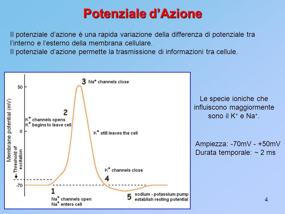 Le specie ioniche che influiscono maggiormente sono il K+ e Na+.