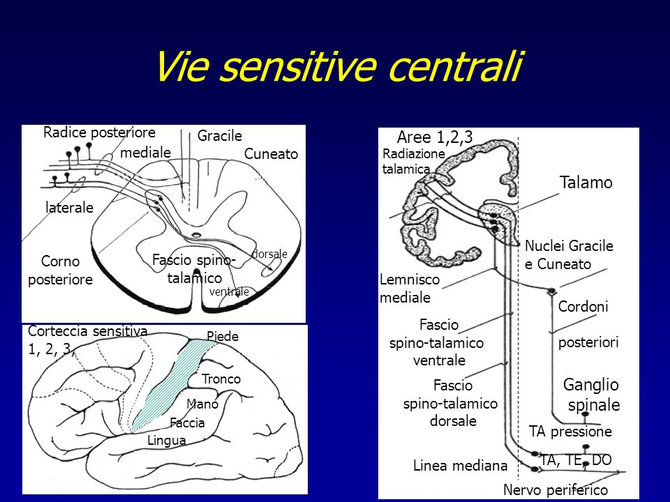 Vie sensitive centrali