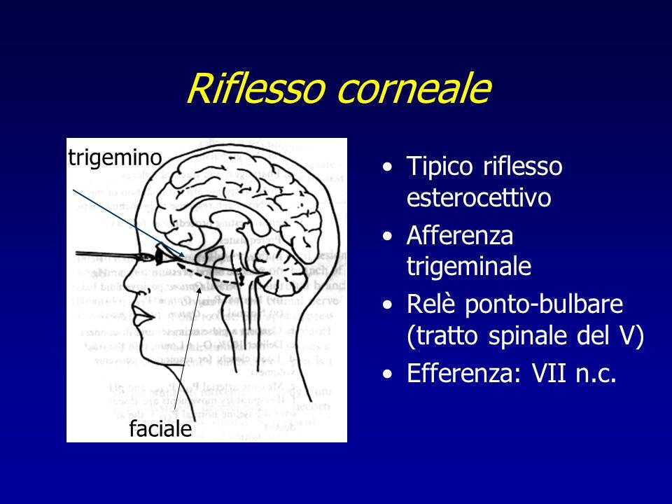 Riflesso corneale Tipico riflesso esterocettivo Afferenza trigeminale