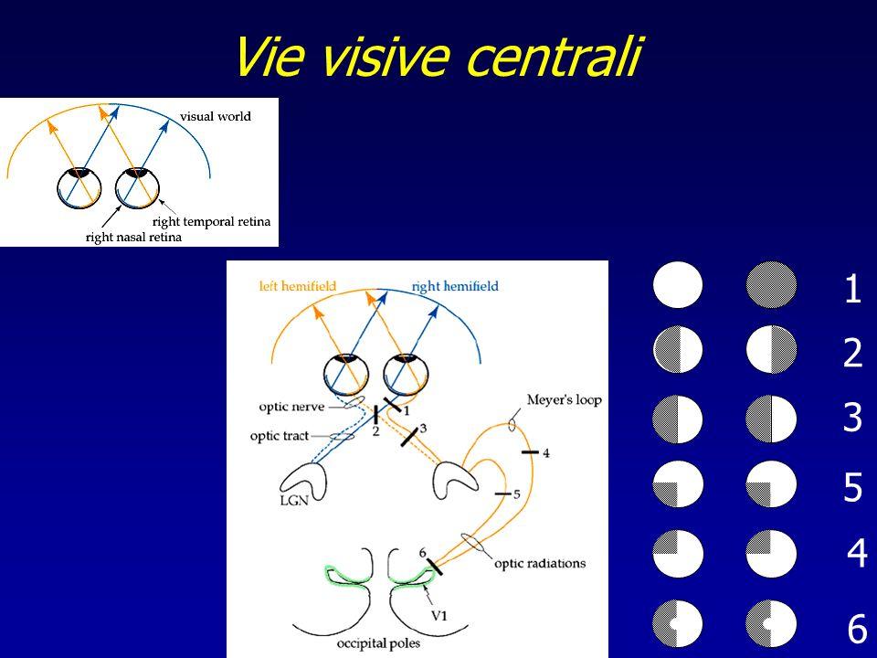 Vie visive centrali 1 2 3 5 4 6
