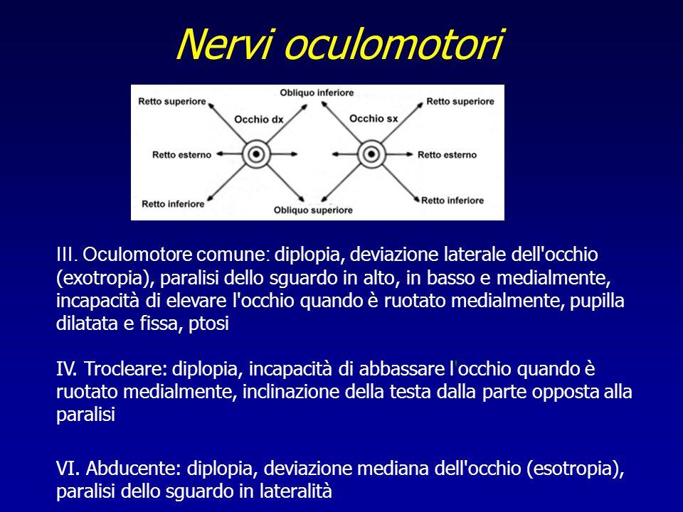 Nervi oculomotori