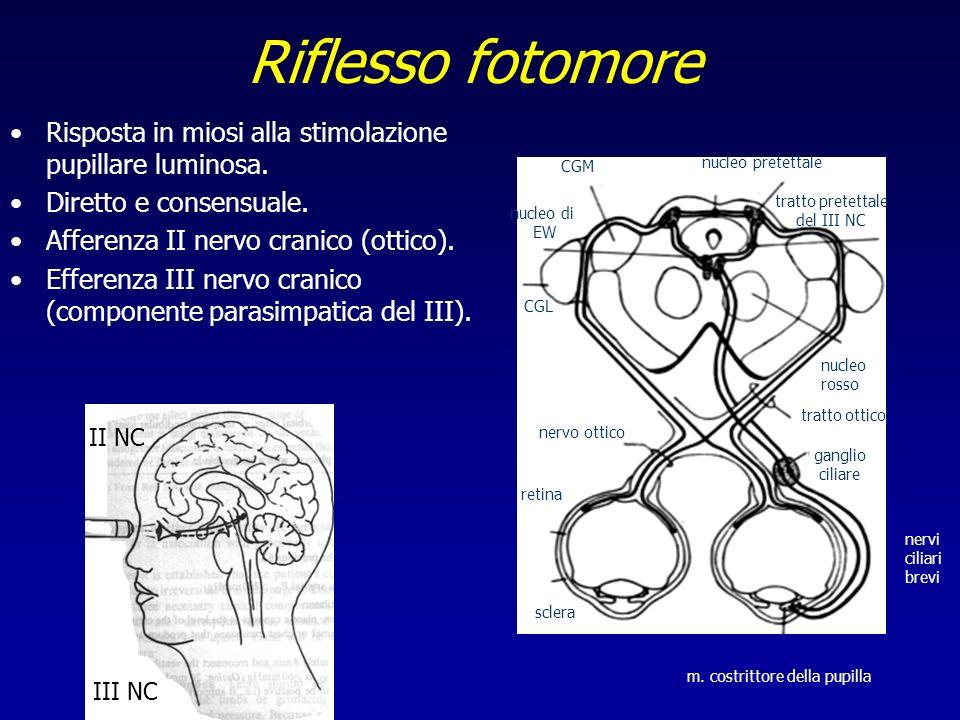 Riflesso fotomoreRisposta in miosi alla stimolazione pupillare luminosa. Diretto e consensuale. Afferenza II nervo cranico (ottico).
