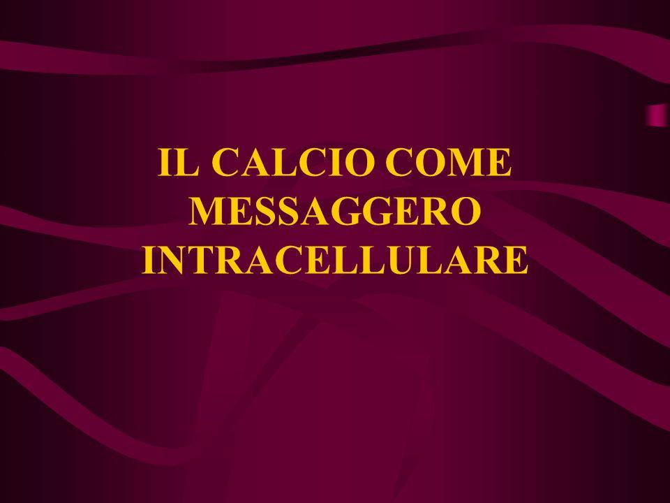 IL CALCIO COME MESSAGGERO INTRACELLULARE
