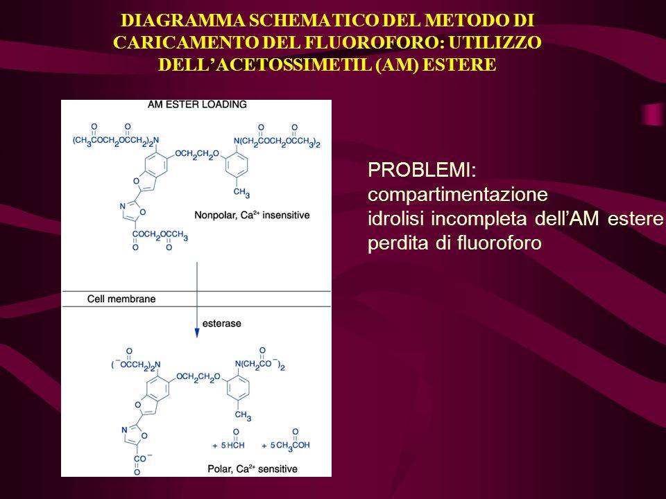 idrolisi incompleta dell'AM estere perdita di fluoroforo