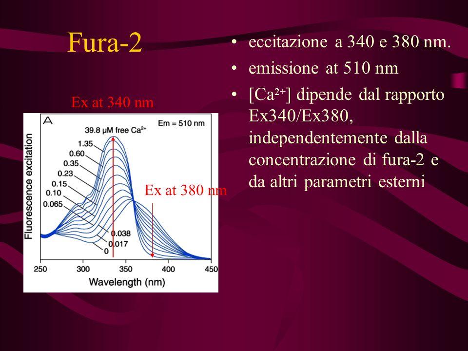 Fura-2 eccitazione a 340 e 380 nm. emissione at 510 nm