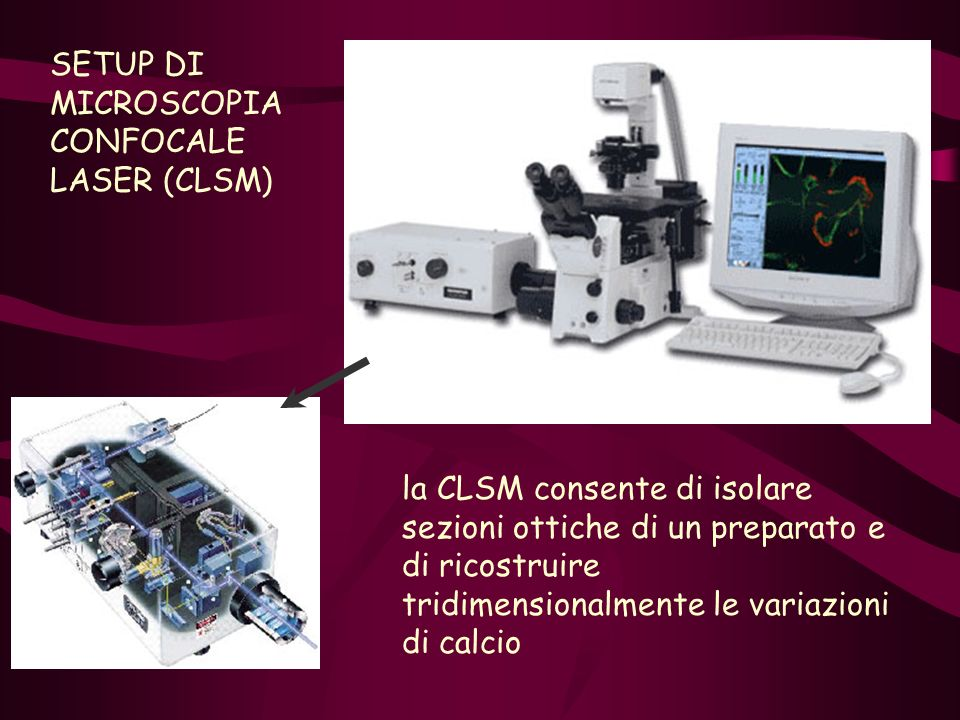 SETUP DI MICROSCOPIA CONFOCALE LASER (CLSM)