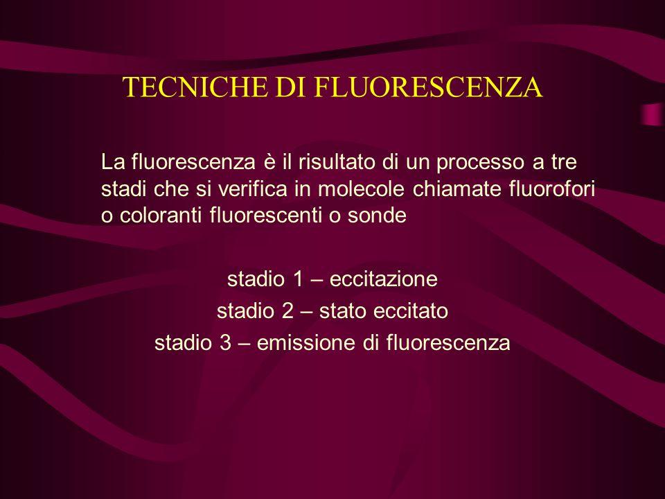 TECNICHE DI FLUORESCENZA