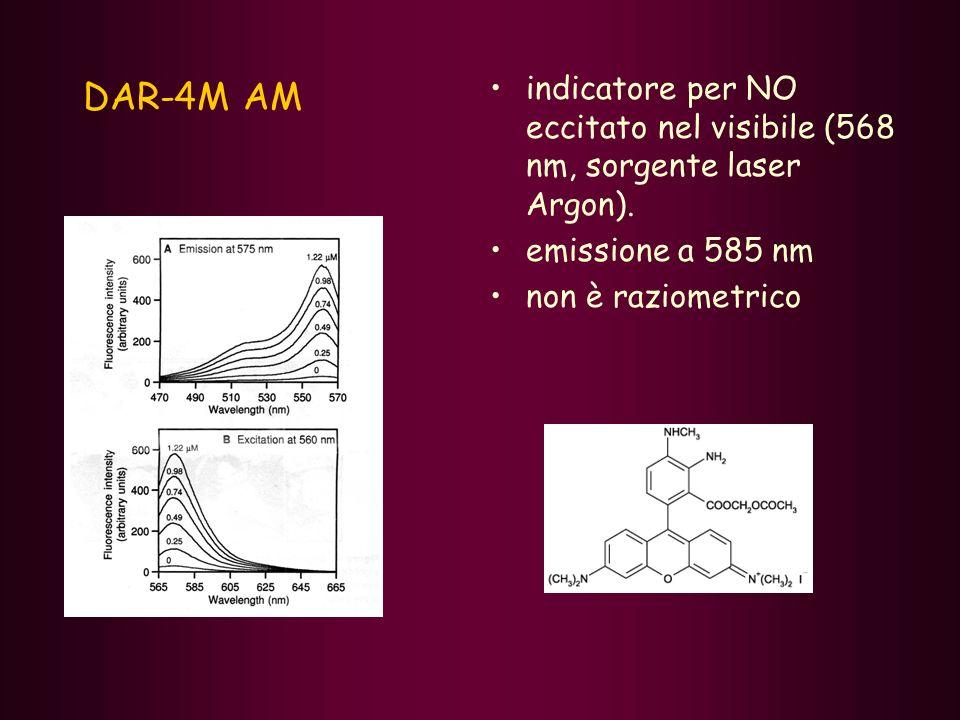 DAR-4M AM indicatore per NO eccitato nel visibile (568 nm, sorgente laser Argon). emissione a 585 nm.