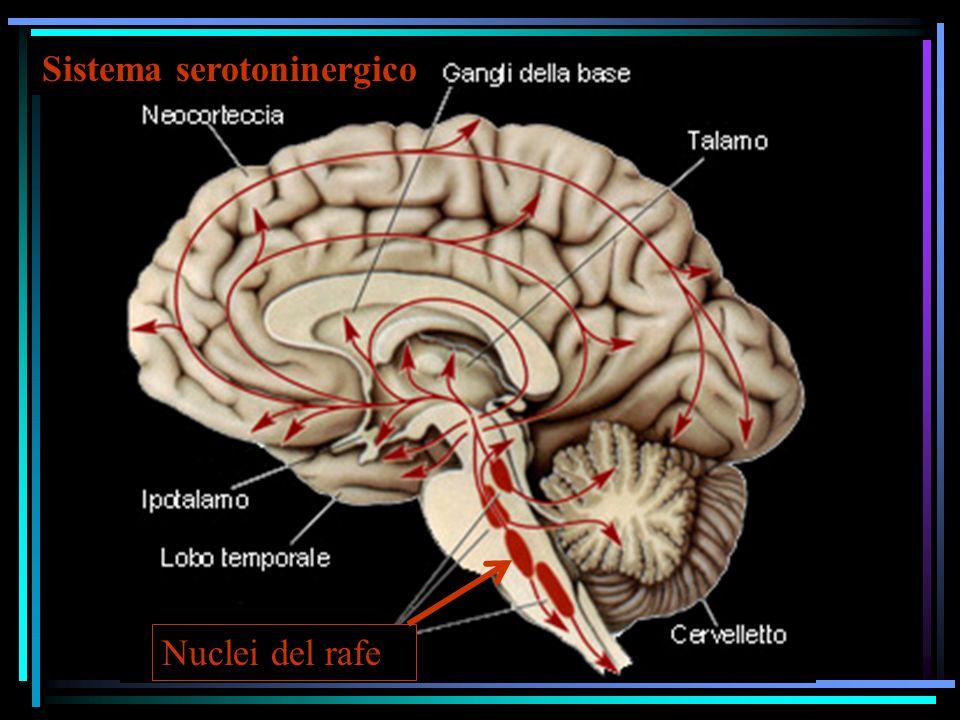 Sistema serotoninergico