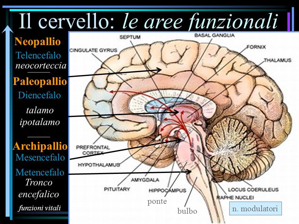 Il cervello: le aree funzionali