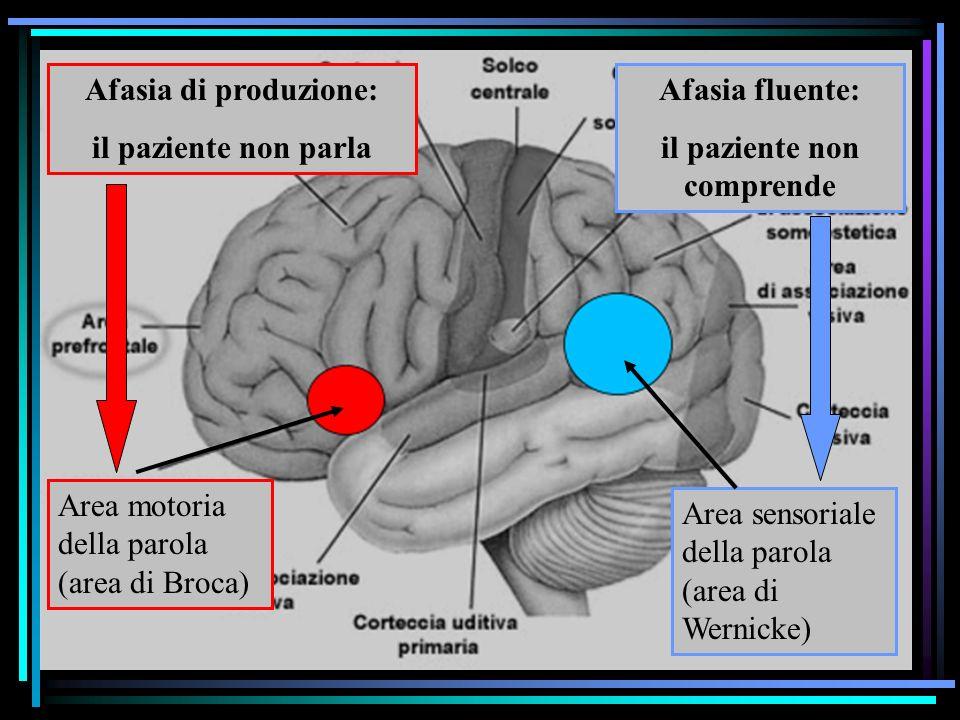 Studio degli effetti di lesioni cerebrali il paziente non comprende