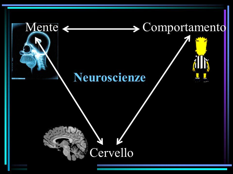 Mente Comportamento Neuroscienze Cervello