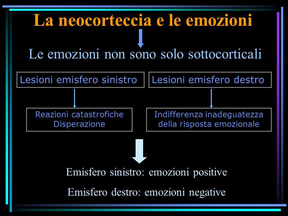 La neocorteccia e le emozioni