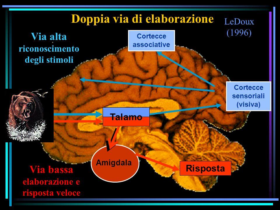 Doppia via di elaborazione Cortecce sensoriali (visiva)