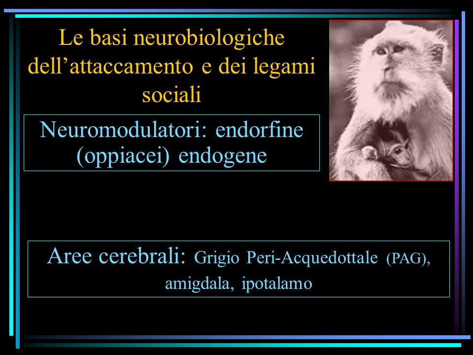 Le basi neurobiologiche dell'attaccamento e dei legami sociali