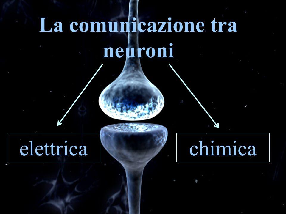 La comunicazione tra neuroni