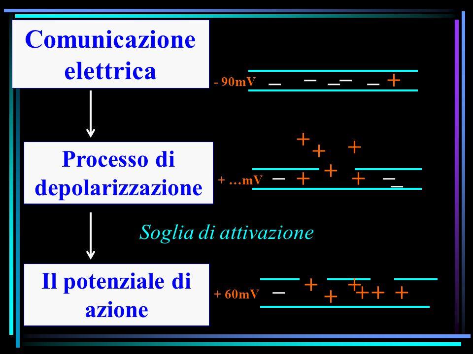 Comunicazione elettrica