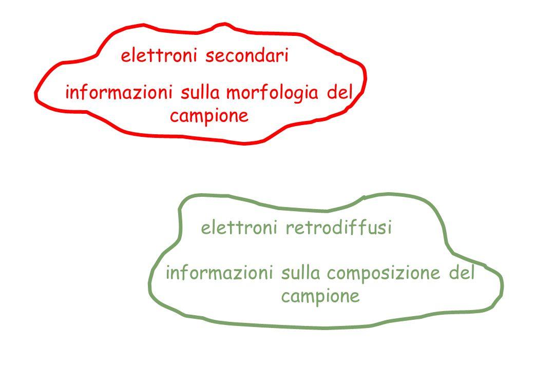 informazioni sulla morfologia del campione