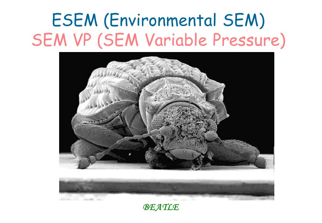 ESEM (Environmental SEM) SEM VP (SEM Variable Pressure)