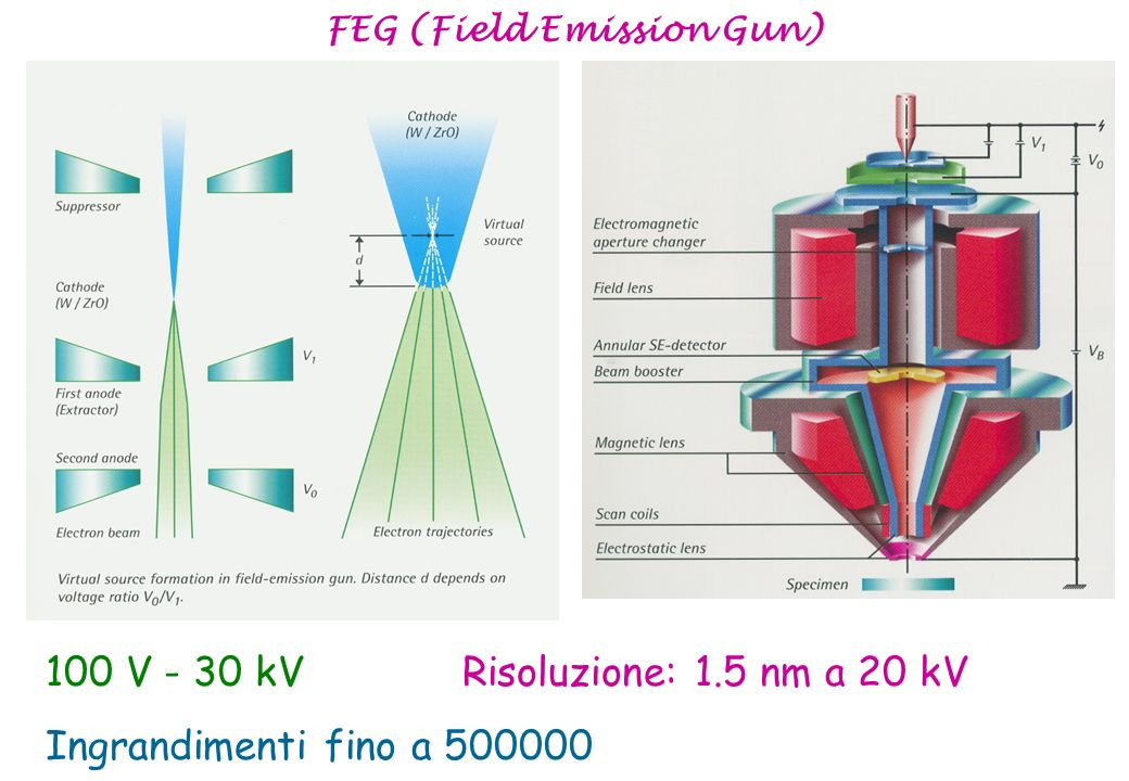 FEG (Field Emission Gun)