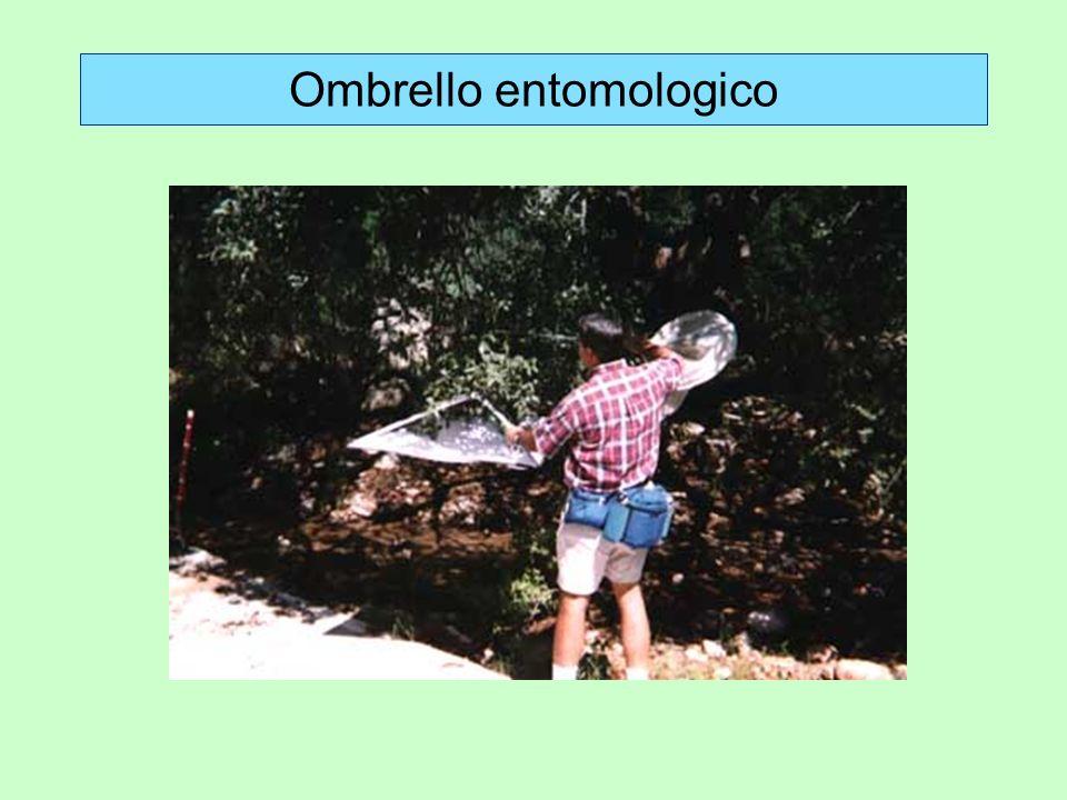 Ombrello entomologico