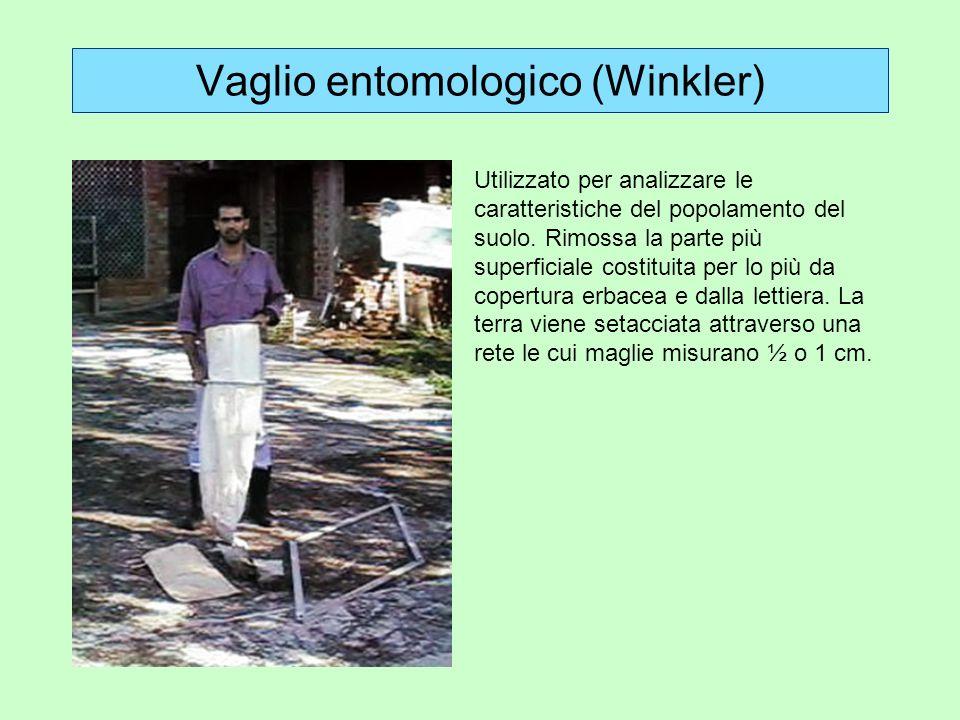 Vaglio entomologico (Winkler)