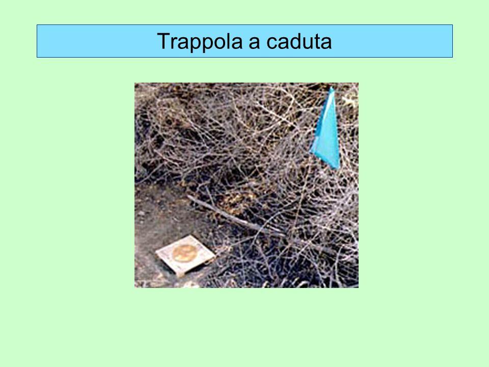 Trappola a caduta