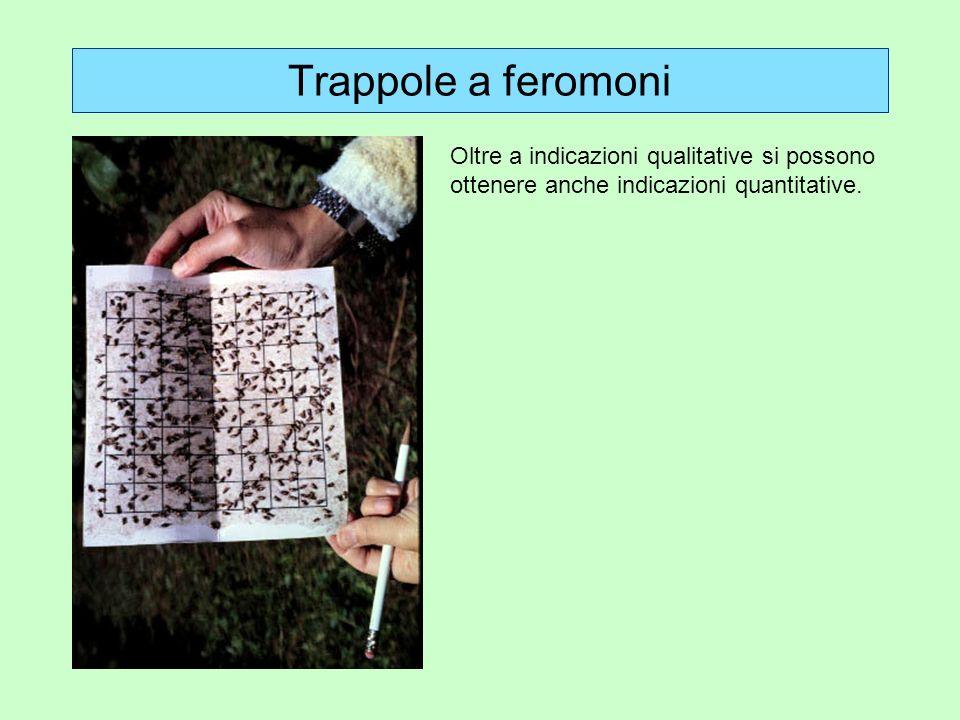 Trappole a feromoni Oltre a indicazioni qualitative si possono ottenere anche indicazioni quantitative.