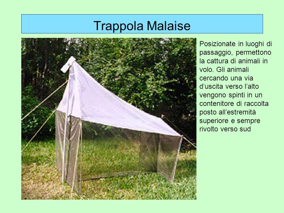 Trappola Malaise