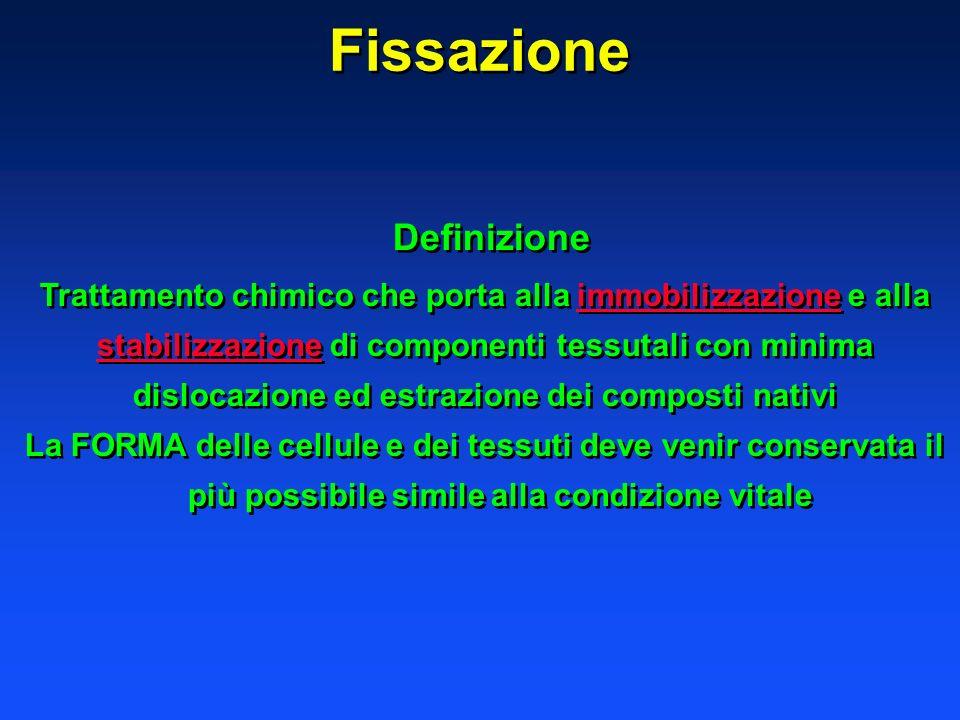 Fissazione Definizione