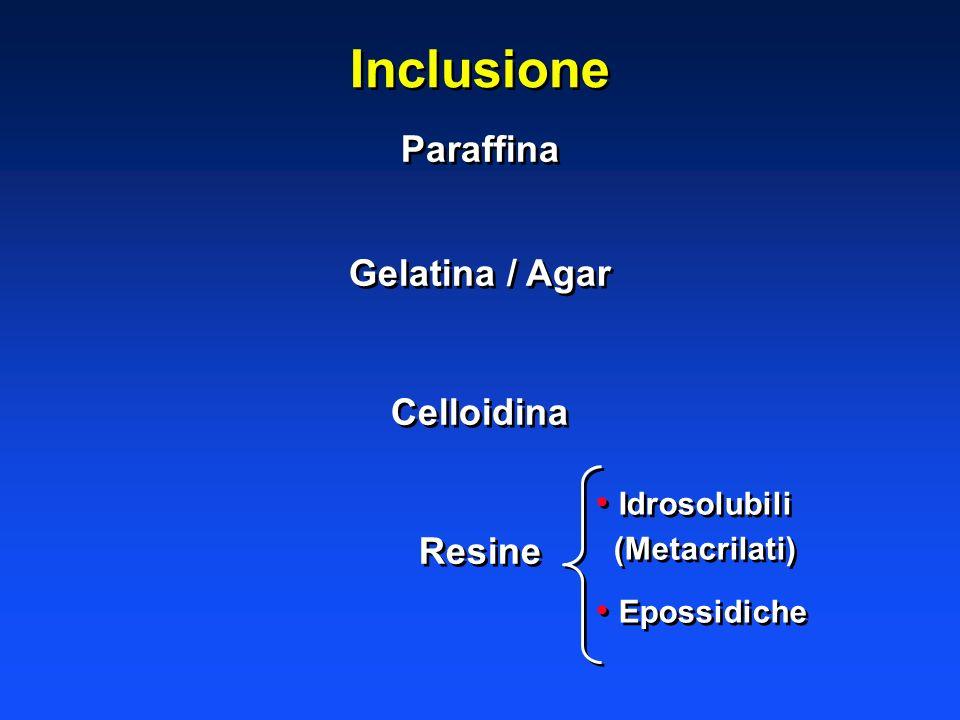 Inclusione Paraffina Gelatina / Agar Celloidina Resine Idrosolubili