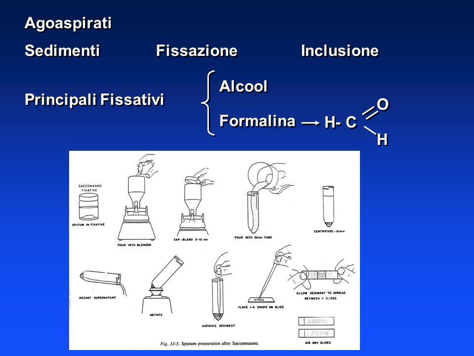 Agoaspirati Sedimenti Fissazione Inclusione Principali Fissativi Alcool Formalina O H- C H