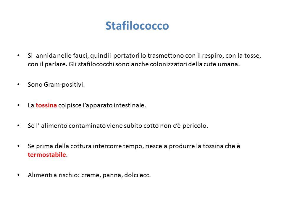 Stafilococco