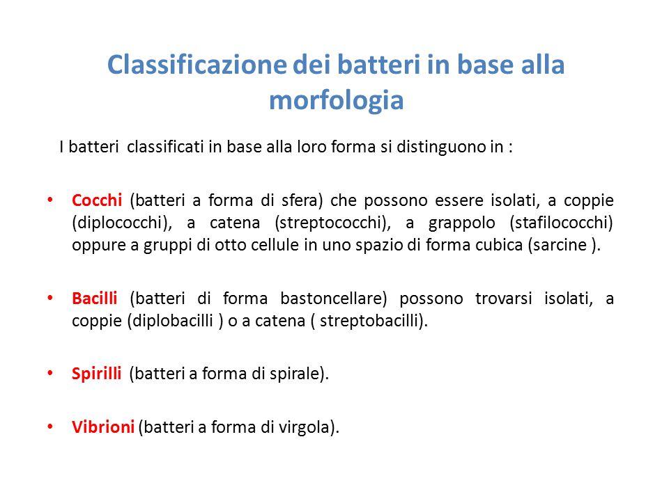 Classificazione dei batteri in base alla morfologia