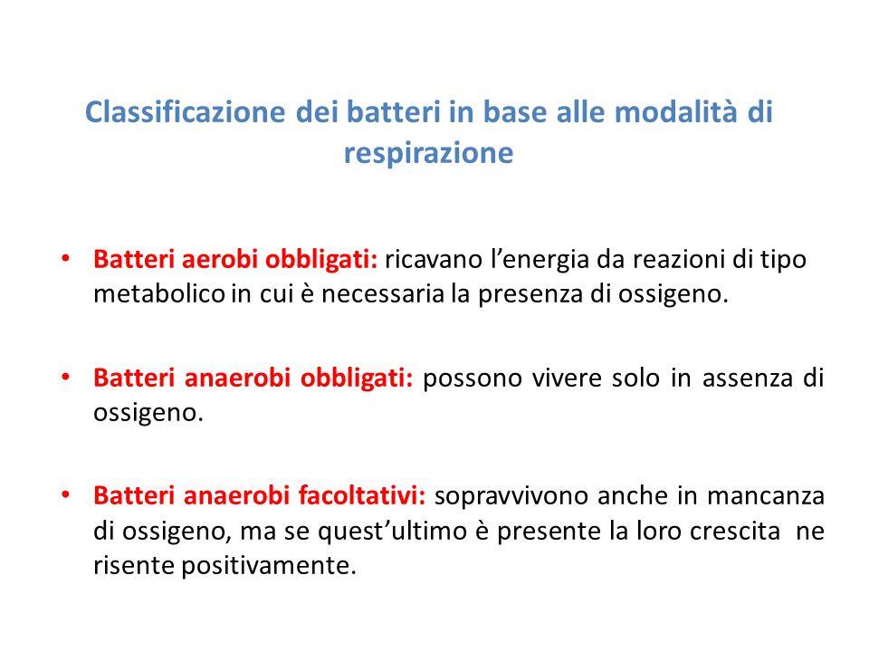 Classificazione dei batteri in base alle modalità di respirazione