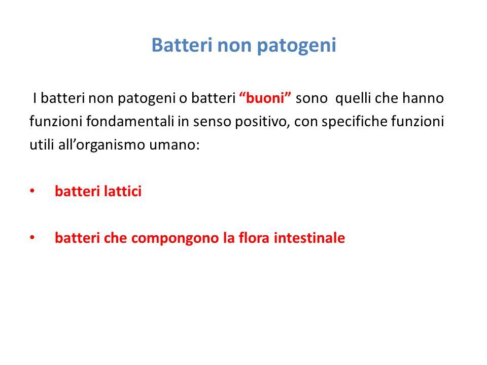 Batteri non patogeni I batteri non patogeni o batteri buoni sono quelli che hanno.
