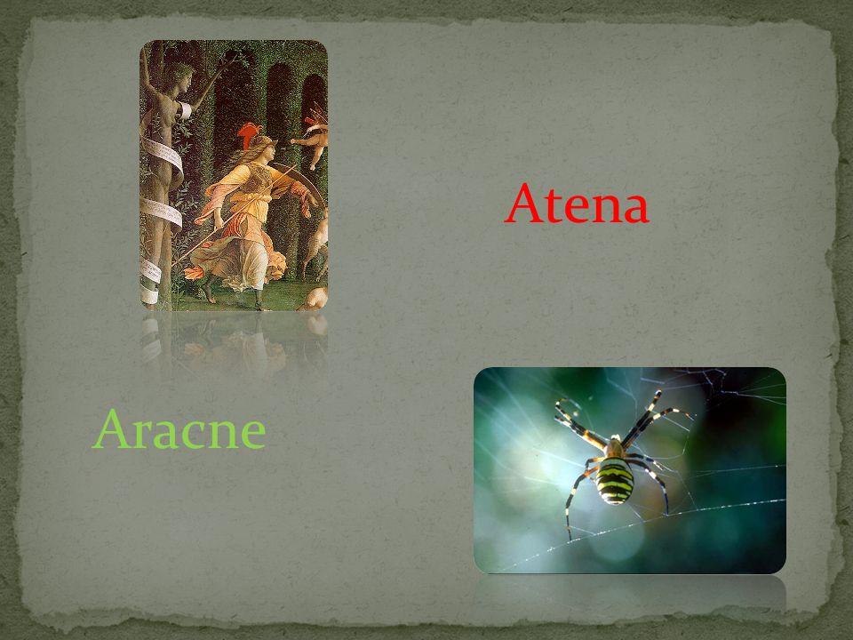 Atena Aracne