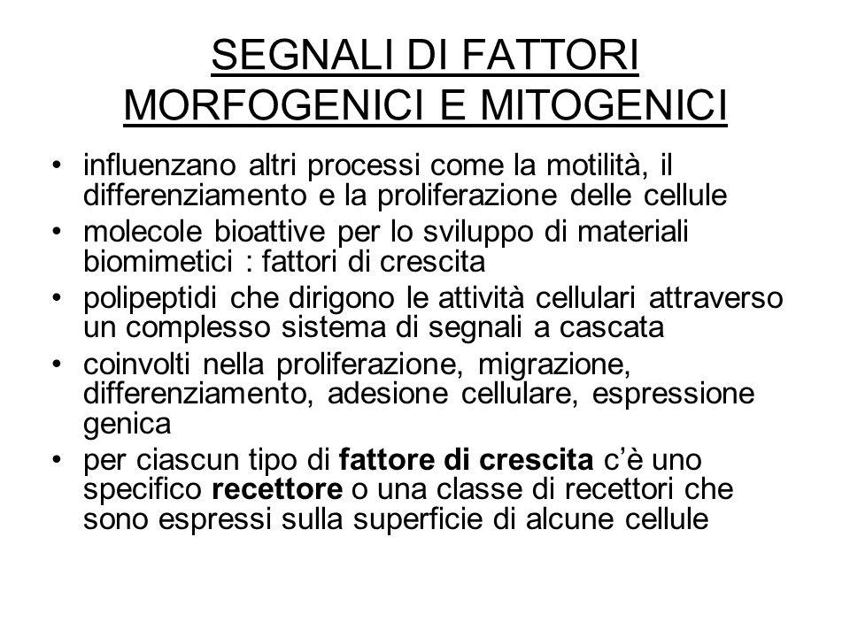 SEGNALI DI FATTORI MORFOGENICI E MITOGENICI