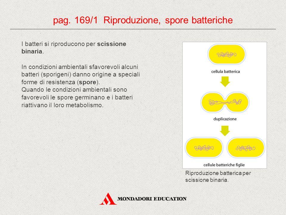 pag. 169/1 Riproduzione, spore batteriche