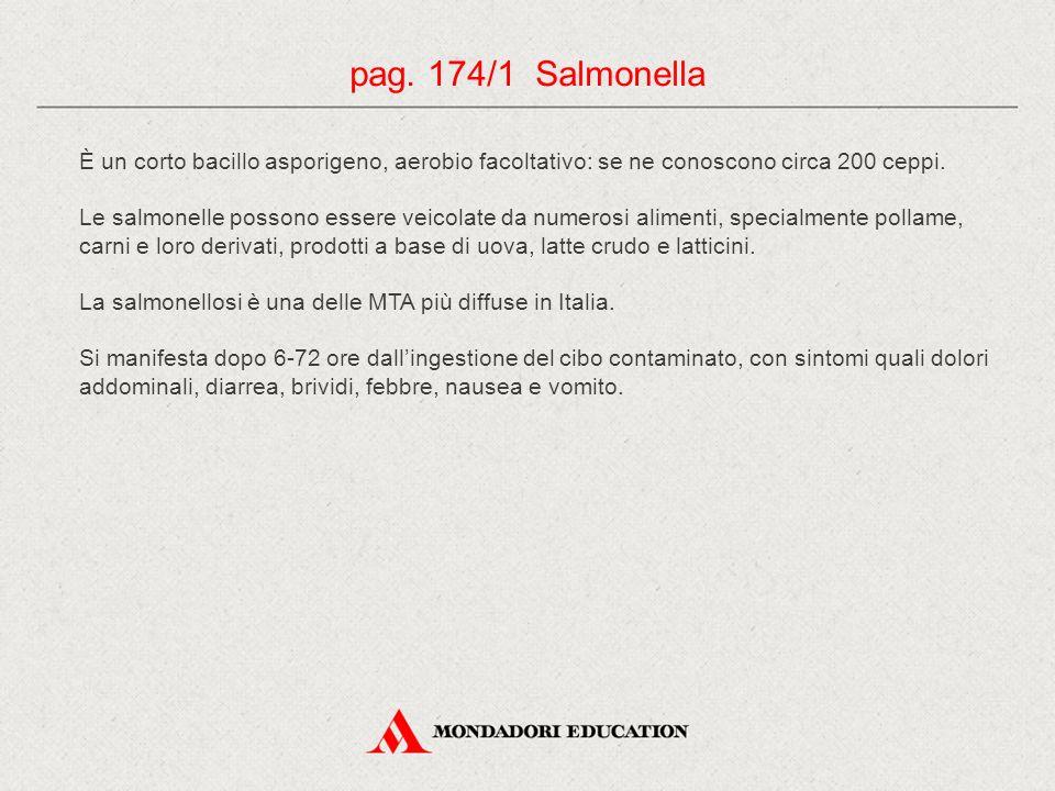 pag. 174/1 Salmonella È un corto bacillo asporigeno, aerobio facoltativo: se ne conoscono circa 200 ceppi.