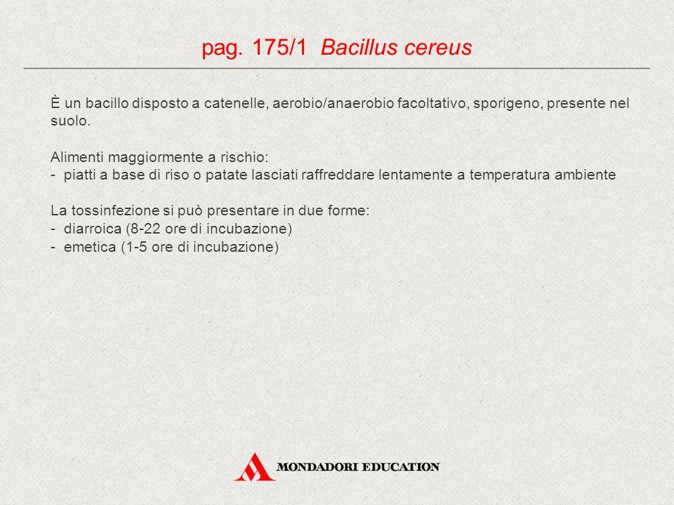 pag. 175/1 Bacillus cereus È un bacillo disposto a catenelle, aerobio/anaerobio facoltativo, sporigeno, presente nel suolo.