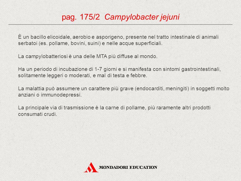 pag. 175/2 Campylobacter jejuni