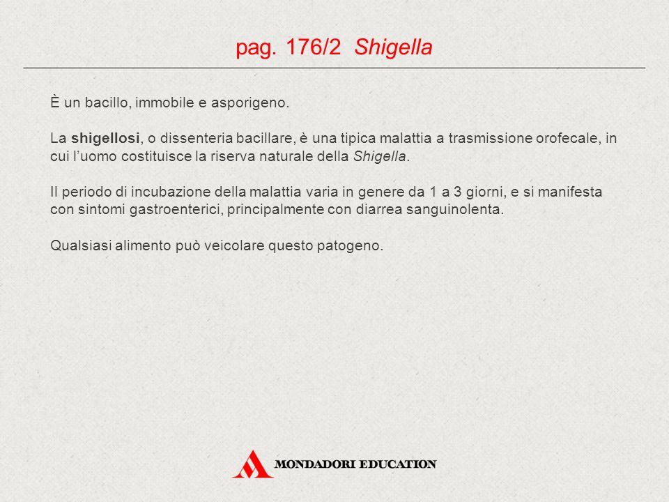 pag. 176/2 Shigella È un bacillo, immobile e asporigeno.